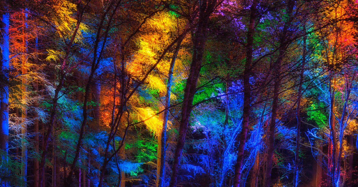 The enchauntit forest in Perthshire, illuminate wi colourt lichts